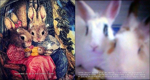 31 mars 2013 : Shakira a posté deux adorables nouvelles photos pour Pâques sur les réseaux sociaux La jolie blonde a reçu en cadeau pour Pâques un très bel oeuf pain avec d'adorables petits lapins ! Plus une photo de ses lapins