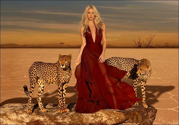 (Re)-Découvrez les photos officielles du parfum Wild Elixir de la belle Shakira Mebarak. J'aime beaucoup ces photos pour le parfum, Shakira était superbe entourée de ces beaux félins. Ils sont vraiment magnifiques !!