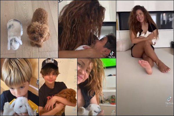 25 Août 2021 : Shakira a posté une nouvelle vidéo, elle nous présente Teddy et Toby ♥ Ils sont tout simplement ADORABLES ! Shakira semble vraiment adorer les lapins, ses fils aussi d'ailleurs *_*