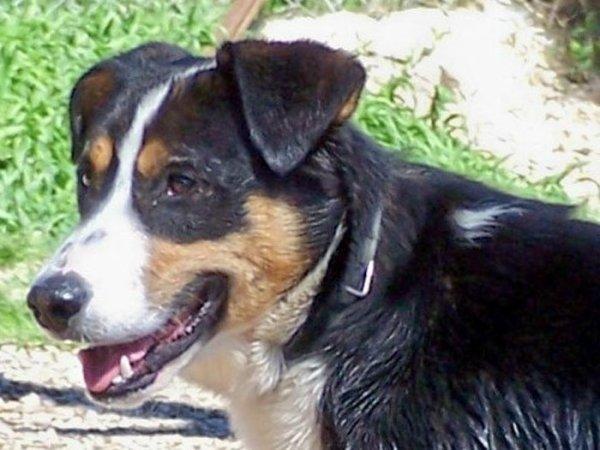 mort de mon chien 12/06/2015
