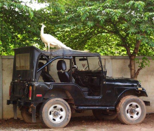 Soun Soben, Cambodge