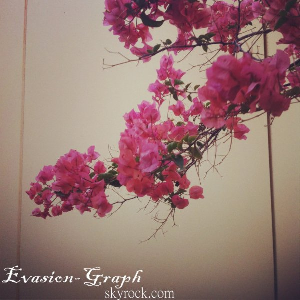 """""""En croyant à des fleurs, souvent on les fait naître. """""""