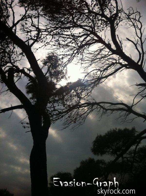 « Ecouter comme un arbre vaut mieux que tout. »