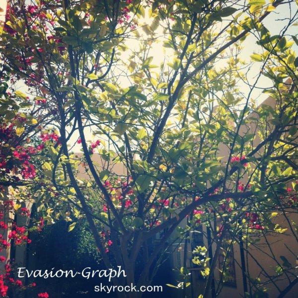 « L'arbre devient solide sous le vent. »