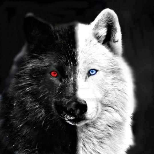 Kdo pour blackwolf666