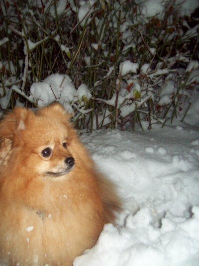 Chanel dans la neige!