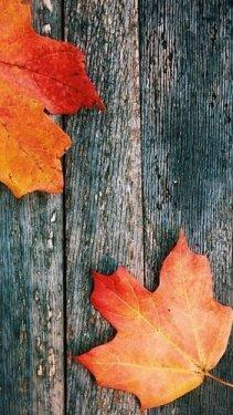 ♡ Autumn ♡