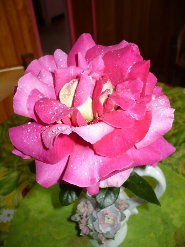 Avec cette rose de mon jardin , je vous remercie mes amies .