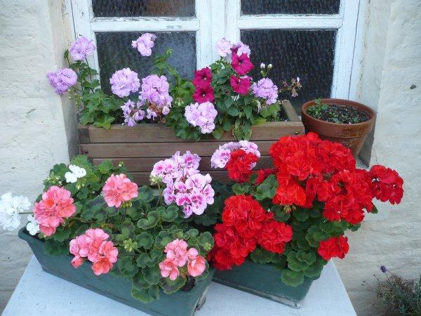 De jolies fleurs de chez moi
