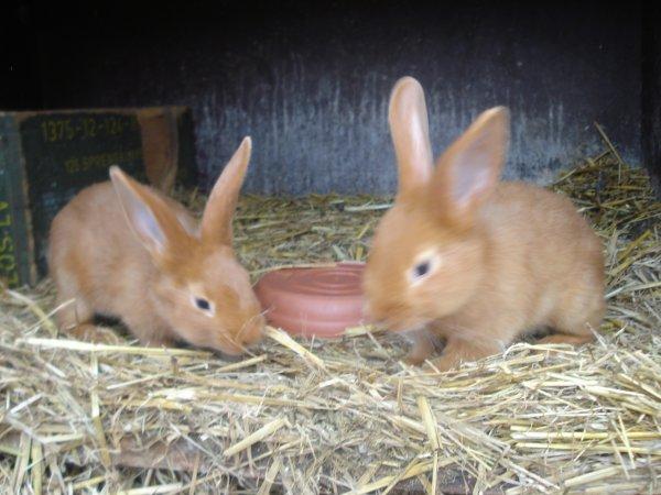 Pâques rime avec lapins et poussins ...