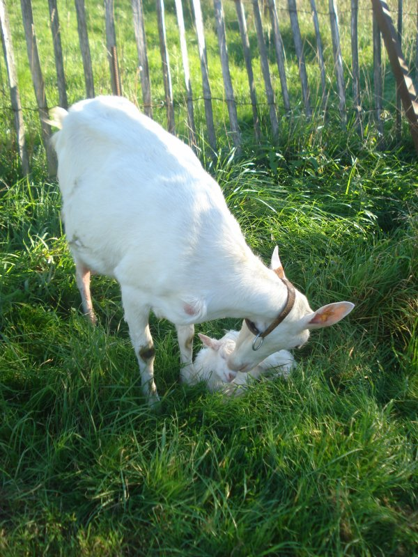 Une naissance inatendue