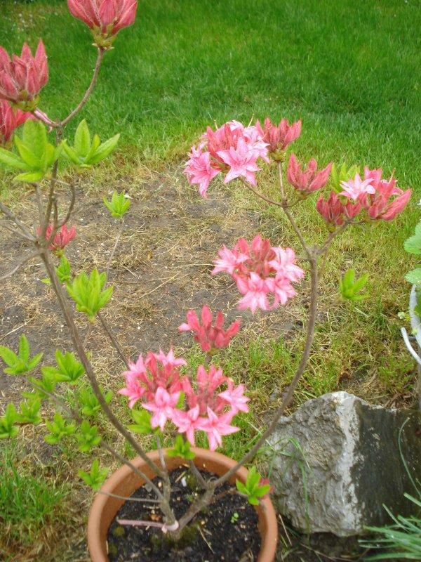 Des fleurs au jardin...