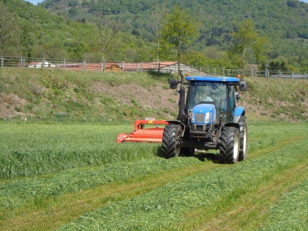 Fauchage 2011 --> --> New-Holland T 6020 Elite