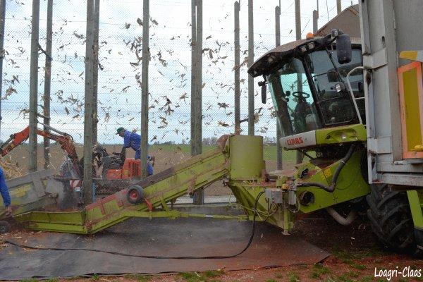 Battage de Maïs en Cribs 2012 --> --> Claas Lexion 600