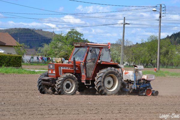 Semis de Maïs 2012 --> --> Fiat-Agri 65-88 DT