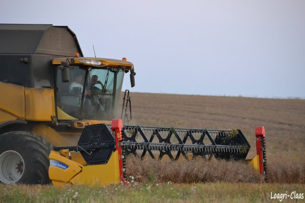 Moisson 2012 --> --> New-Holland CX 8080