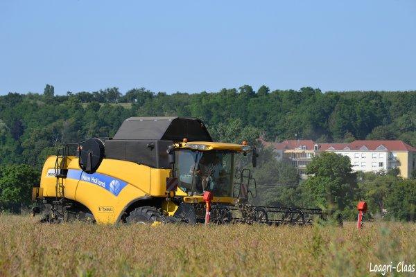 Moisson du Colza 2012  --> --> New-Holland Cx 8040