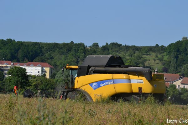 Moisson du Colza 2012  --> --> New-Holland Cx 8040