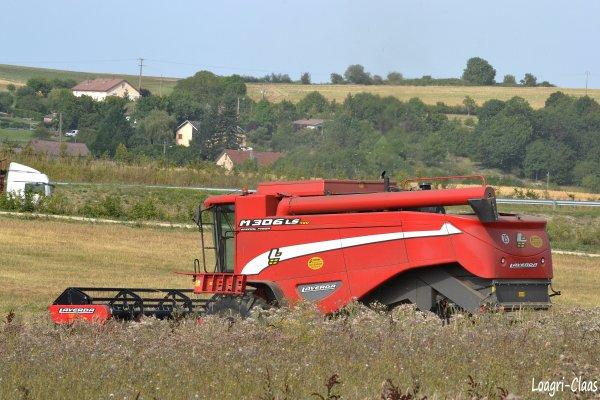 Moisson Du Blé BIO 2012 --> --> Laverda M 306 LS