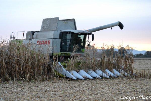 Moisson Du Maïs 2012 --> --> Claas Lexion 570