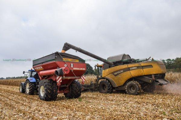 Moisson du Maïs Grain | New-Holland Cx880 & New-Holland T7.200 & Transbordeur Horsch UW 160