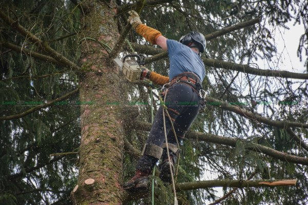 Abattage par démontage d'arbres délicats = Rev'Elagage dans les Vosges