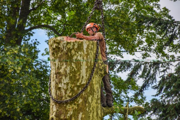 Abattage en condition Extrême | Grue de 55 Tonnes liebherr | Arbre de 37m de haut | ETS Paulus