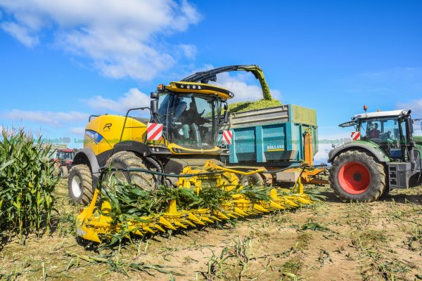 Ensilage de Maïs 2016 | New-Holland FR650 Forage Cruiser 10 Rangs | St Nabord Agricole Cheval