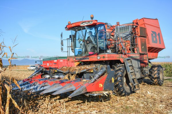 Récolte du Maïs Epis au Corn Picker 2016 | Bourgoin B1 & Dominoni 6 rangs | Chargement des Cribs