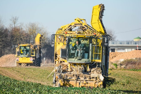 Arrachage de Betteraves dans la Marne 2016 | Ropa Tiger & Débardeuse Ropa