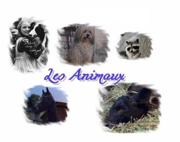 Aujourd'hui, un article qui concerne les animaux de la série !