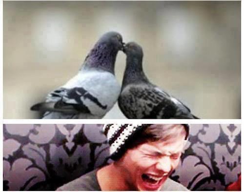 Pauvre Louis...