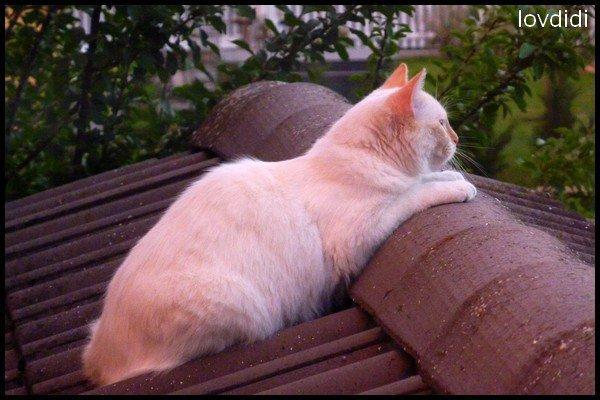 Chat du voisin sur mon toit :)