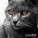 Photo de lovdidi