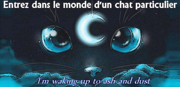 Le monde du Miaou