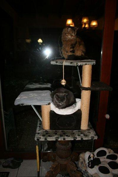 L'arbre à chat!