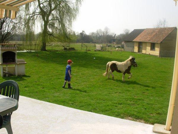 Le 01.06.2012 Le poney est vendu