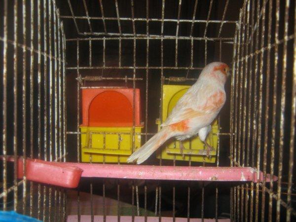 mon oiseau préféré