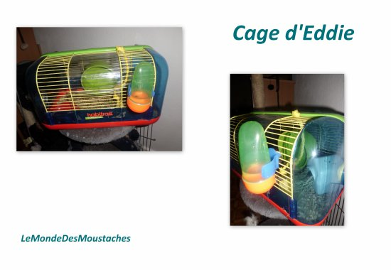 Mes cages