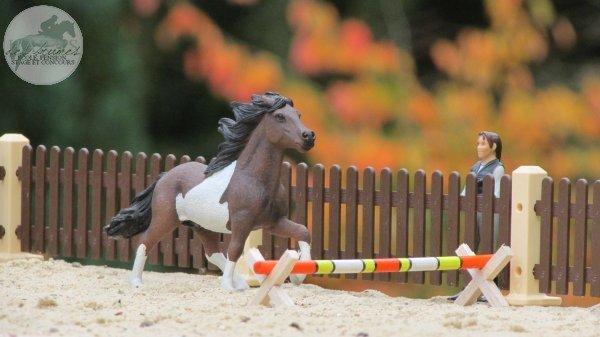 Un poney bien énergique