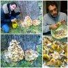 Funghi chiodini 8-p