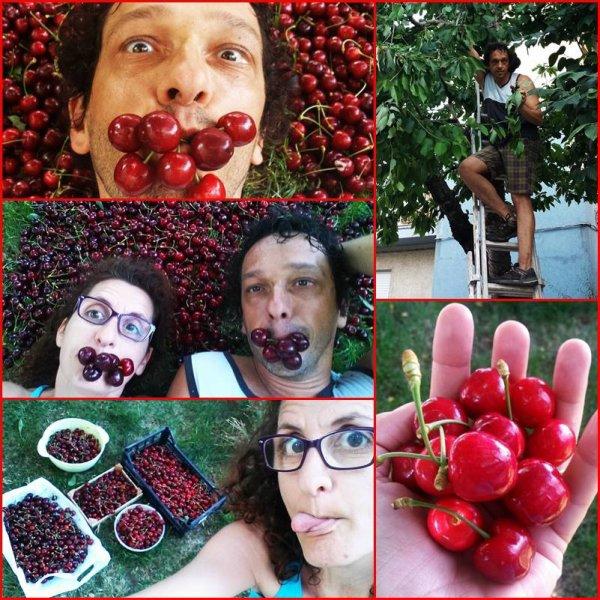 abbiamo raccolto tante ciliegie del nostro albero di casa...mamma mia tante grosse buonissime ?????