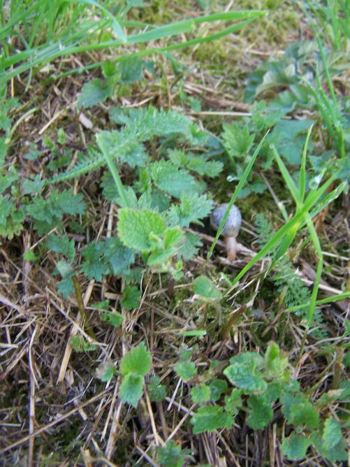 Les limaces et escargots au jardin