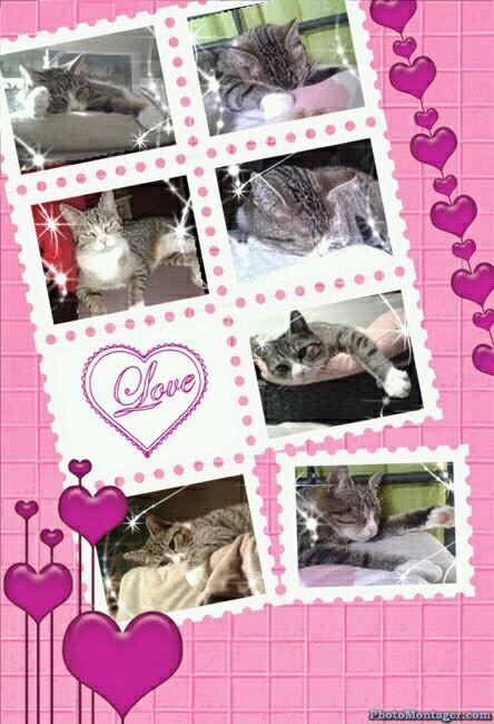 Je vous presente mon chat : Félyne