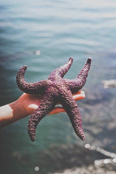 """""""Des milliers d'étoile de mer.. et une, unique.""""   # 60"""