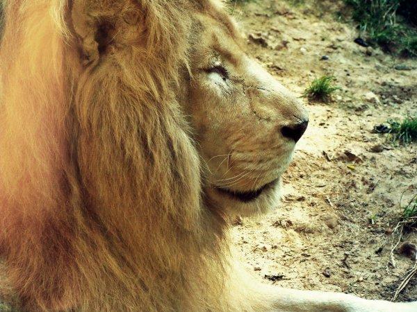 """"""" Les animaux sont incapables de former cette association d'idées que seule peut produire la réflexion. """"."""