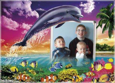 (l)(l)(l)montage dauphins(l)(l)(l)