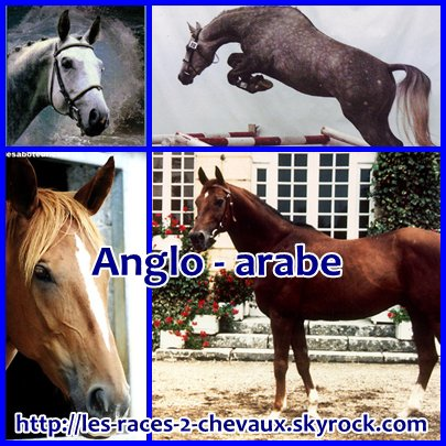 Anglo - arabe