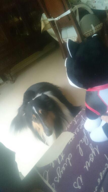 Voici mon Nigou à peine arrivé qui va sur le canapé *^*