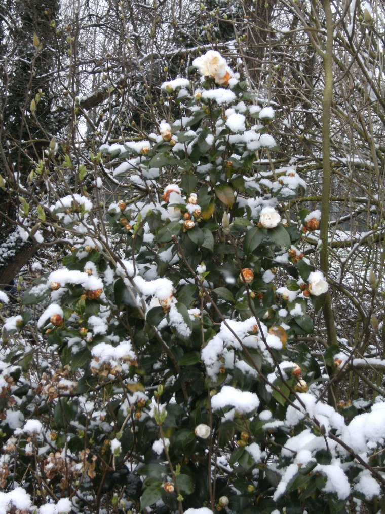 Depuis hier soir il neige !!!